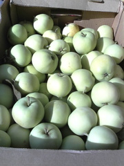 Яблоки краснодарский край