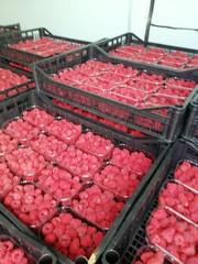 Услуги помощника в приобретении свежих фруктов из Сербии